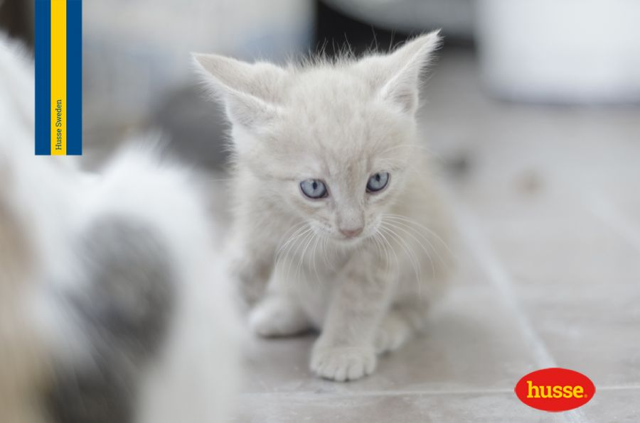 Aiuto Il Mio Gatto Perde Il Pelo 5 Suggerimenti Utili Per