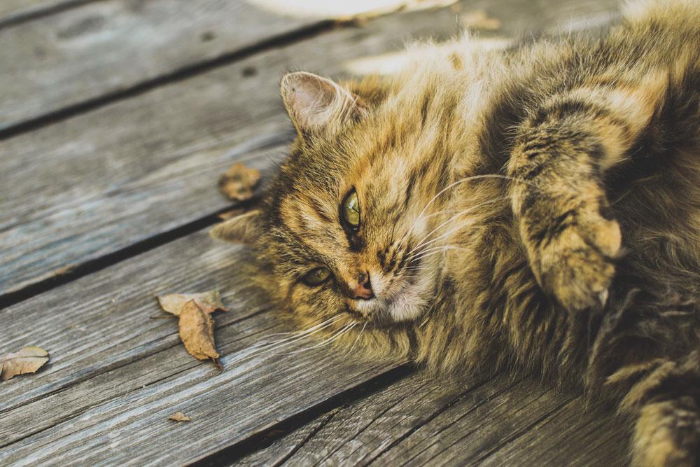 Gatti Grassi Cani Obesi 5 Metodi Utili Per Prevenire Lobesità