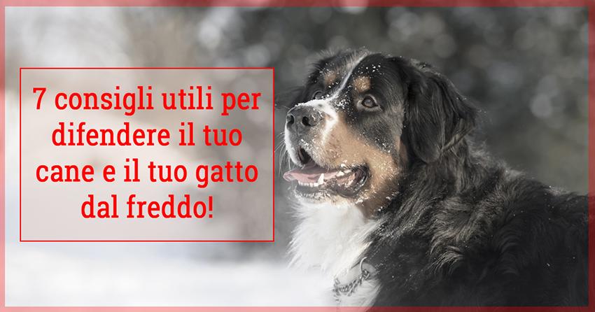 Pavimento In Gomma Per Box Cani : Cani e gatti sentono freddo consigli utili per difenderli dal