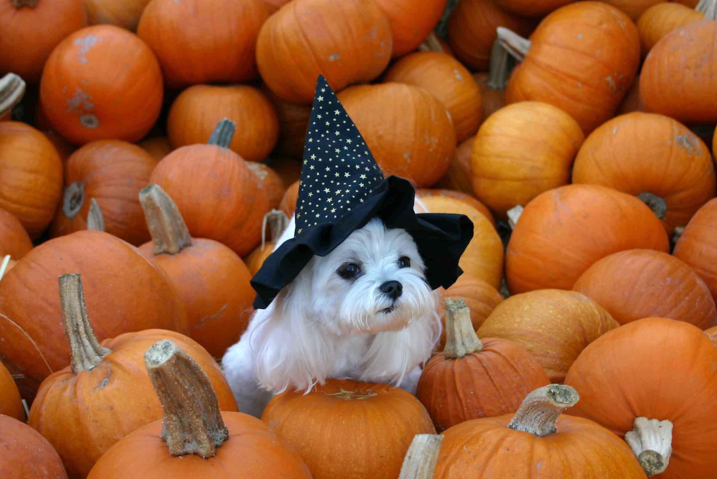 5 Cose Che Stressano Il Tuo Cane E Il Tuo Gatto Nella Notte Di Halloween
