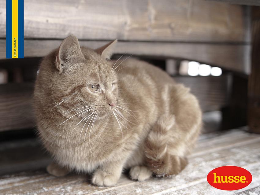10 Cose Che Stressano Il Tuo Gatto